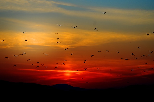 Birds in the Sunset